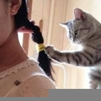 猫与少女丷