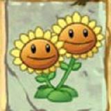 双胞向日葵
